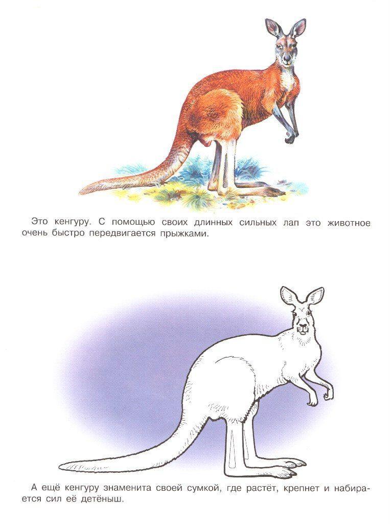 Раскраски с животными (с изображениями) | Животные ...