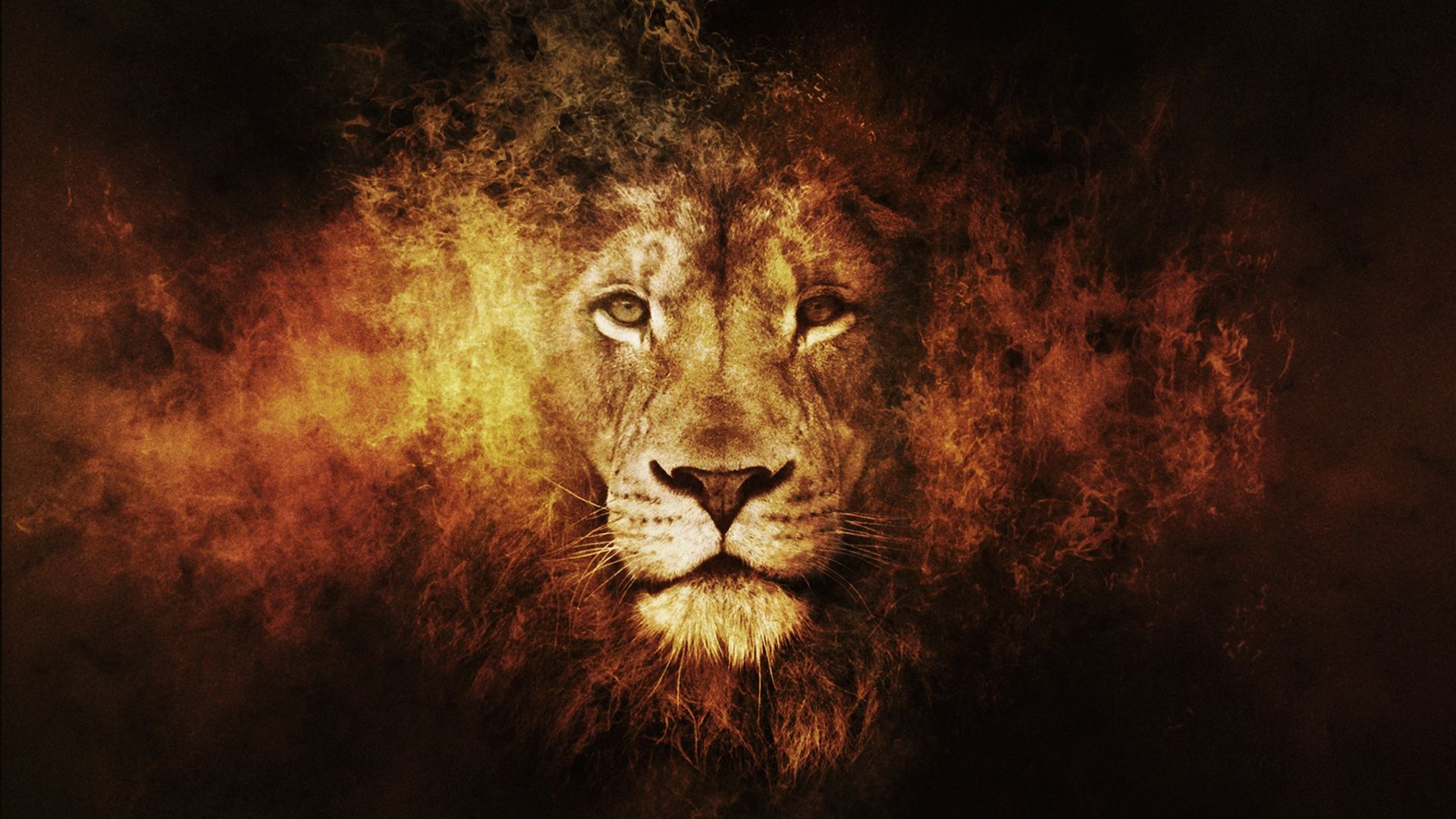 desktop lion hd wallpapers 1080p