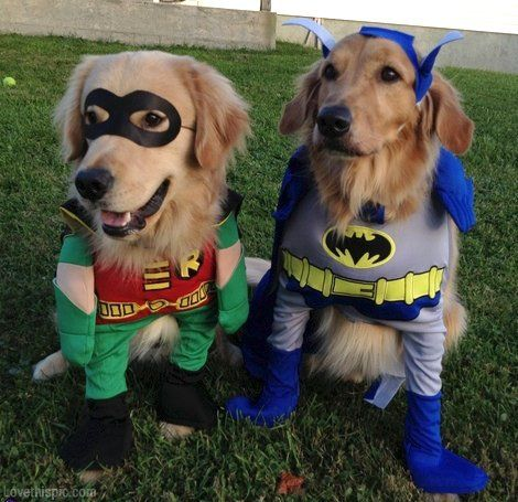 Image By J Ski On Dogs Pet Halloween Costumes Halloween Animals