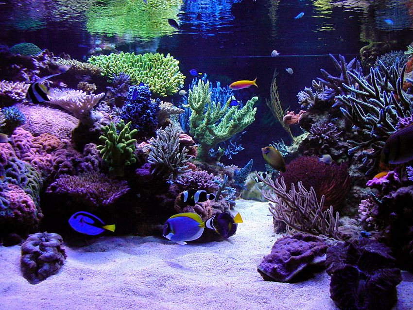 Best tanks from around the world page 2 reef central for Community saltwater fish