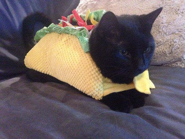 Cats Dressed For Halloween | Taco Black Cats Pinterest Cats Pets And Cute Animals