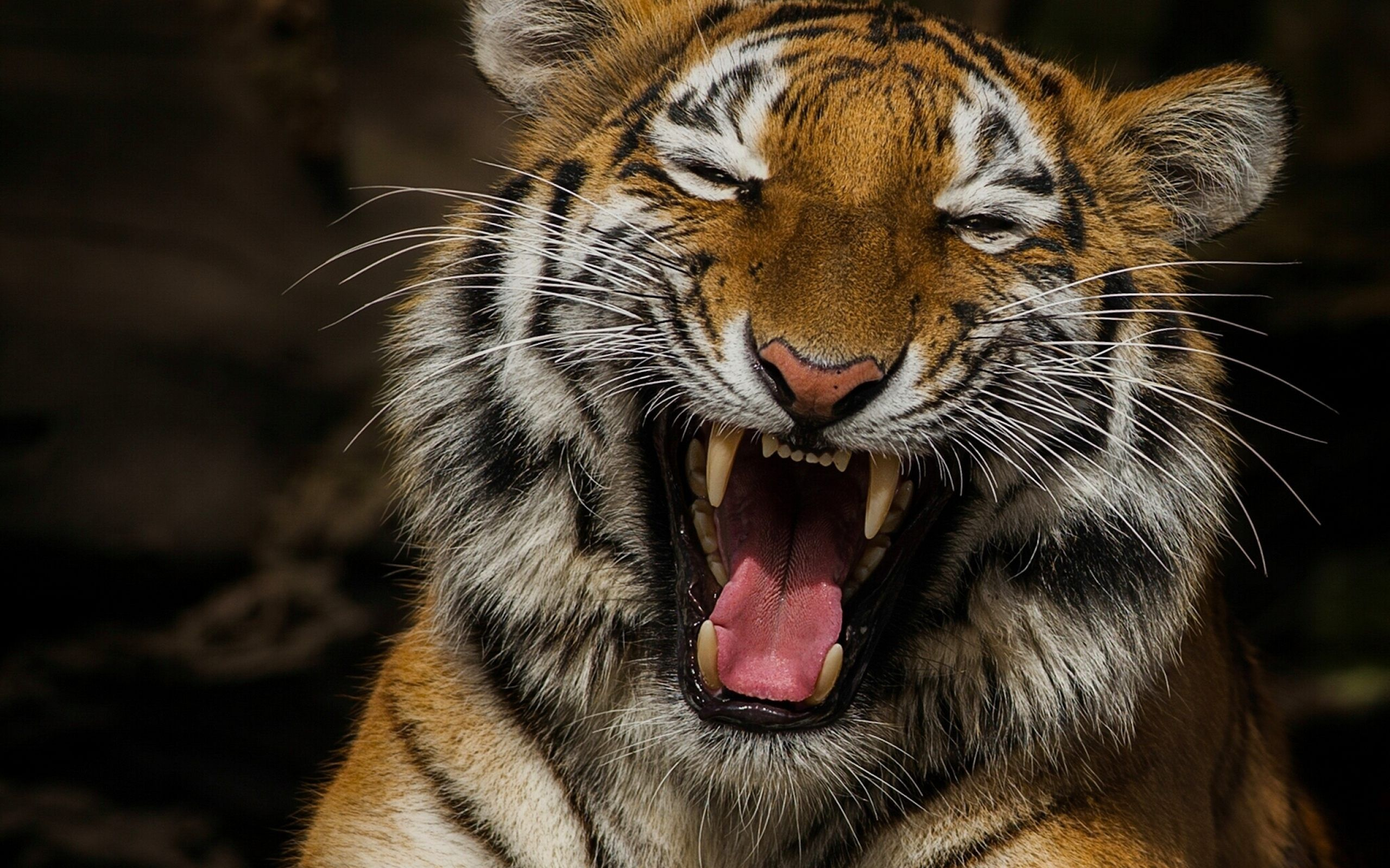 tiger live wallpaper android apps on google play | art wallpapers