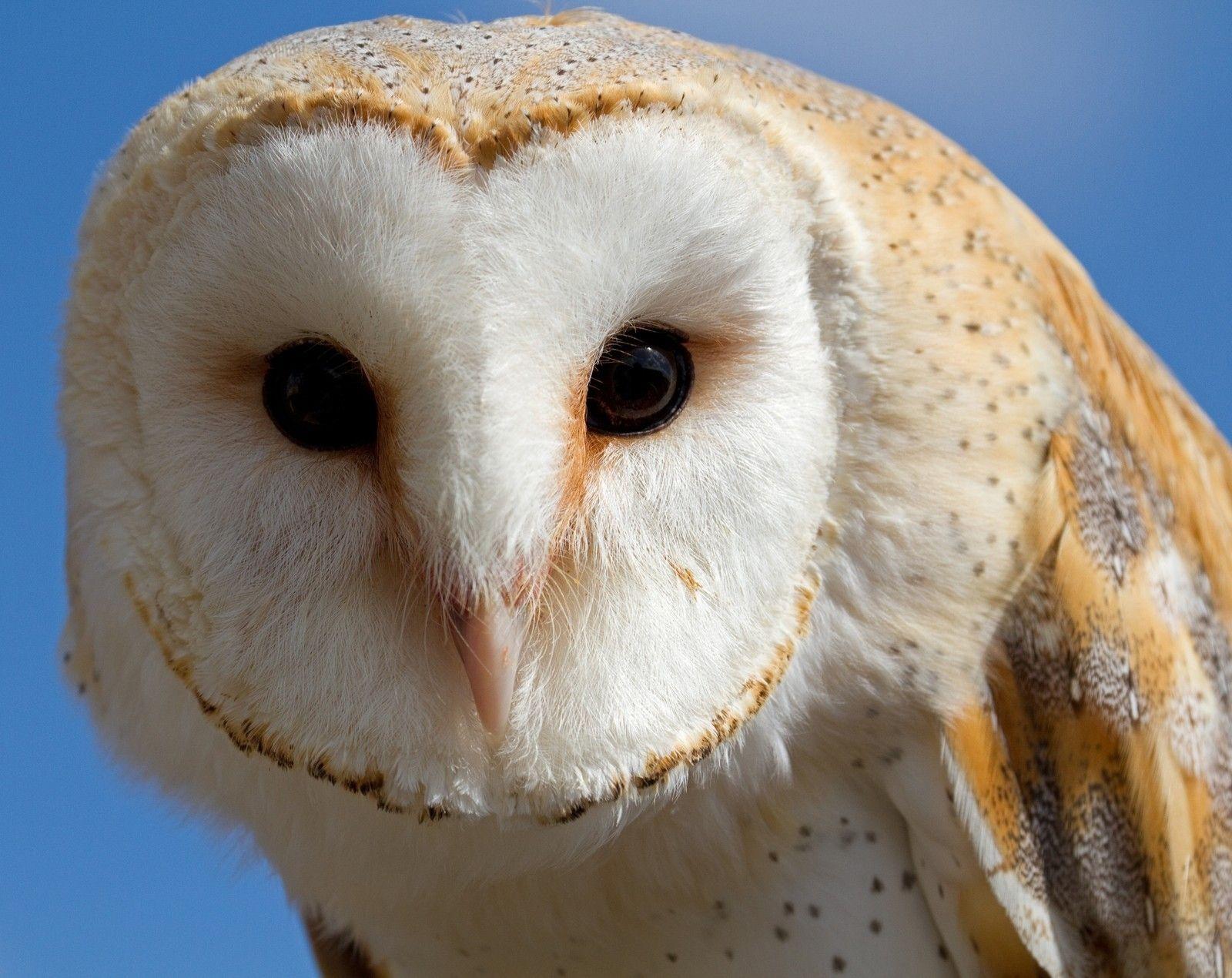 Details about Owl / Bird 8 x 10 / 8x10 GLOSSY Photo ...