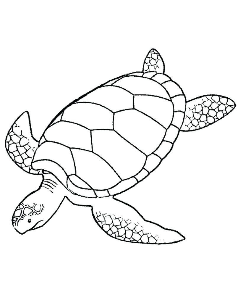 Loggerhead Turtle Coloring Page