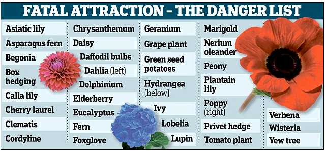 Poison For The Dogs Plants Poisonous To Dogs Plants Dog Friendly Plants