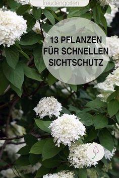 11+ Schnell wachsende Pflanzen für einen Sichtschutz Stock
