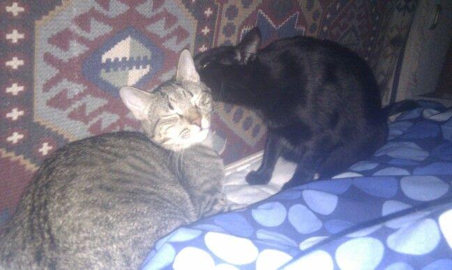 Mis gatitos dandose amor. Tertura Africa y Leonardi