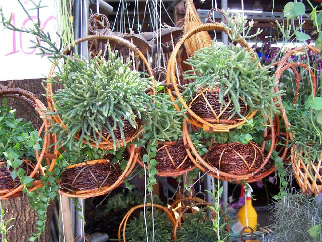 Growing Orchid Plants Orchids Asia Orchid Growing Pots