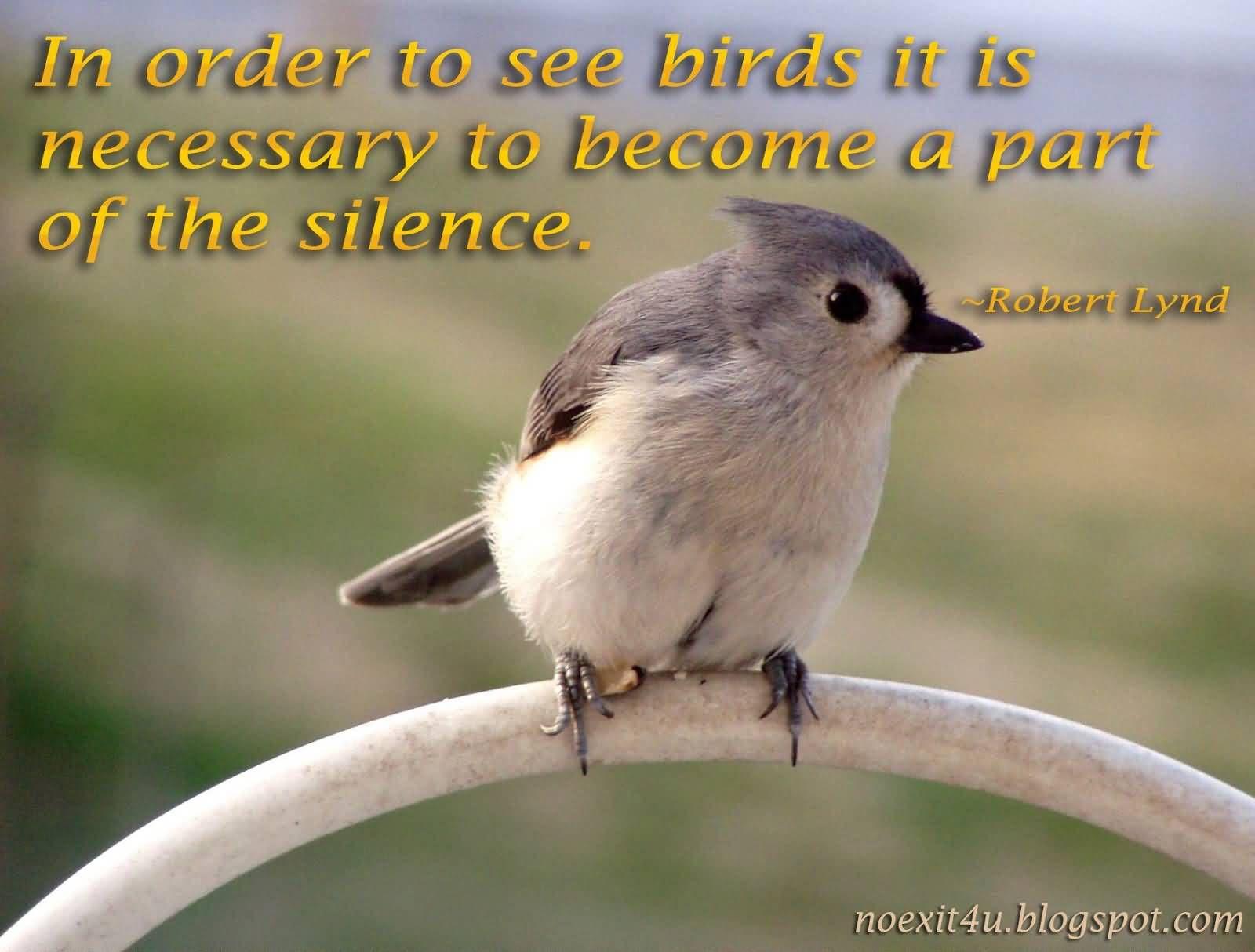 Birds Quotes Gorgeous Awesome Birds Quotes  Parryz  Mooi Aanhalings  Pinterest