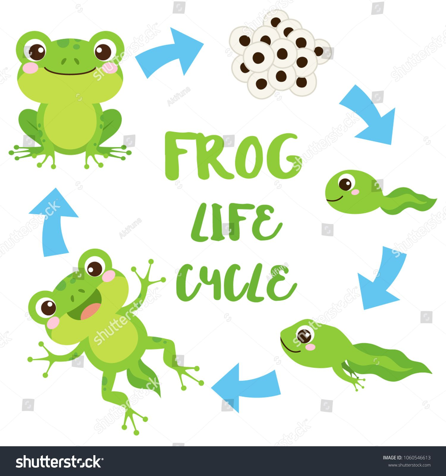 Life Cycle Of A Frog Cute Cartoon Wild Animal Egg Masses