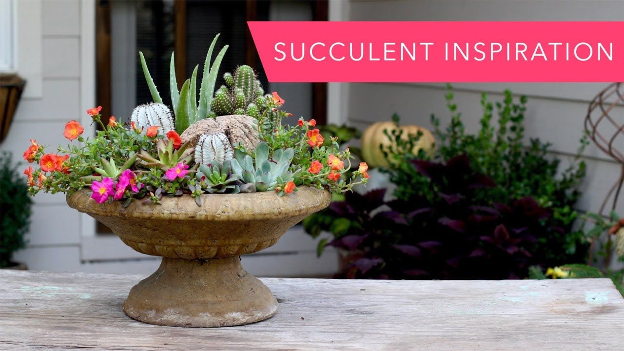Succulent Inspiration YouTube Colorful succulents
