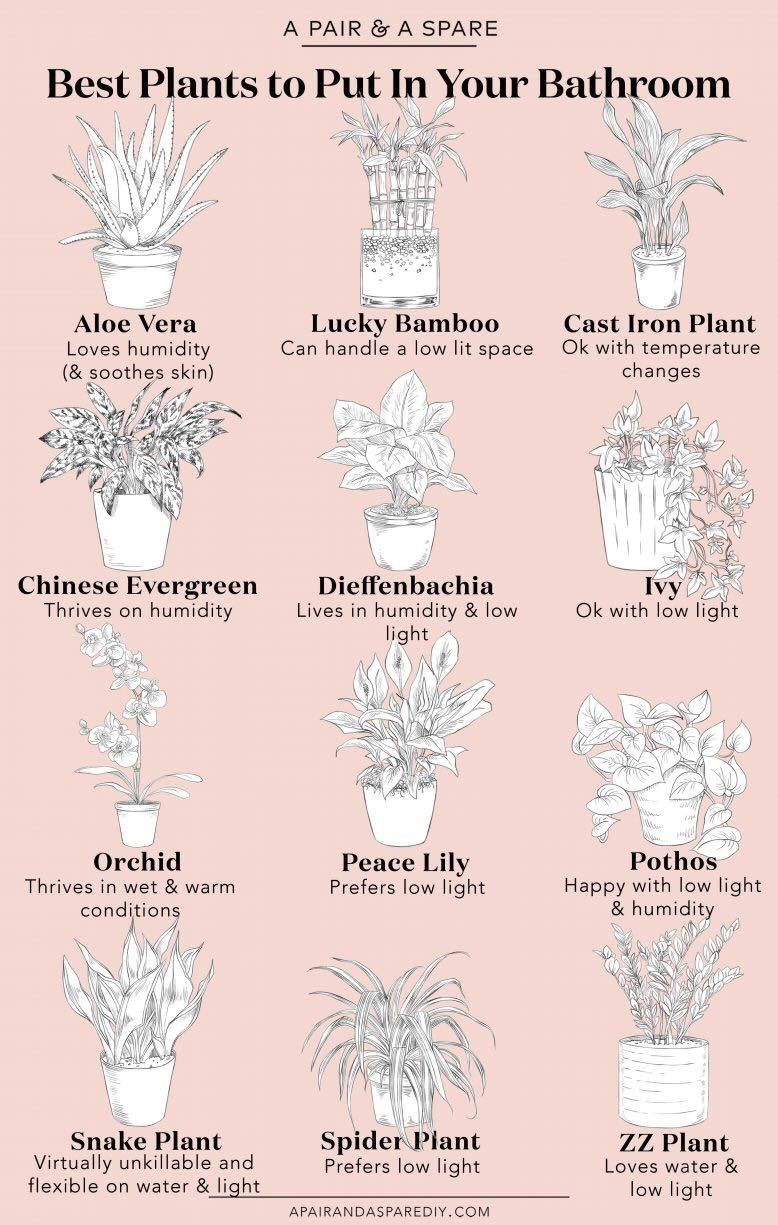 Pin By Meagan Snyder On Plants Bathroom Plants Natural Home Decor Cool Plants