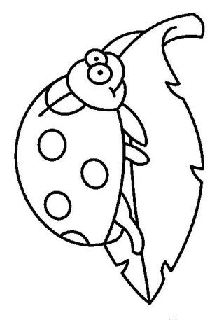 Insects Coloring Page 23