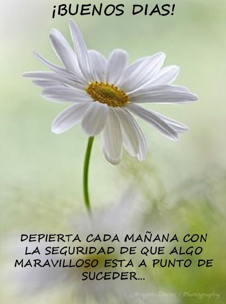 Dia Quote Fascinating HOY ES EL DIA Buenos Dias Pinterest Buen Dia Dia Quote And Frases