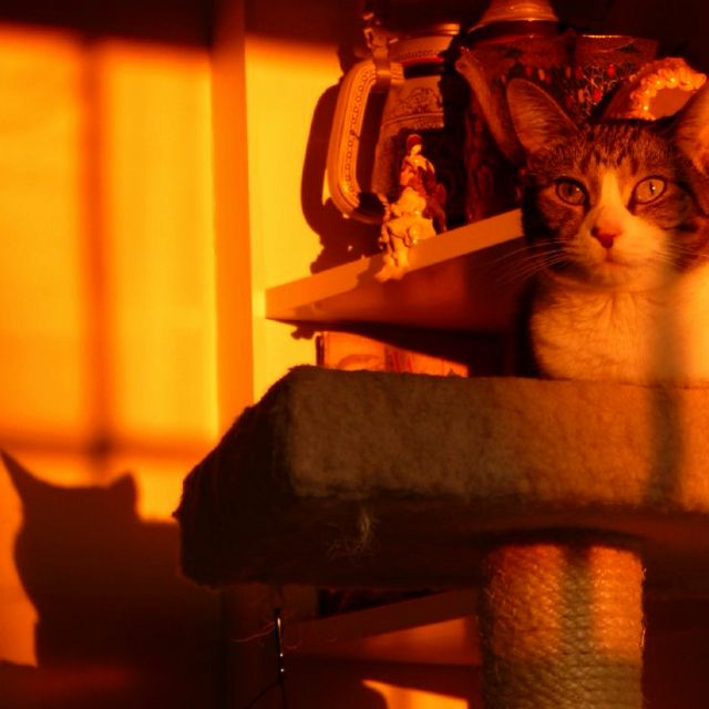 """Our """"Littles Kitty"""" at sunset."""
