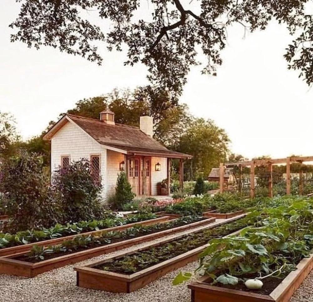 22 Incredible Budget Gardening Ideas: 35 Excited Vegetables Garden Ideas (22)
