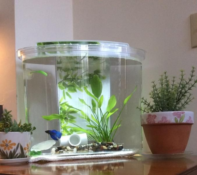 how to set up a fish bowl