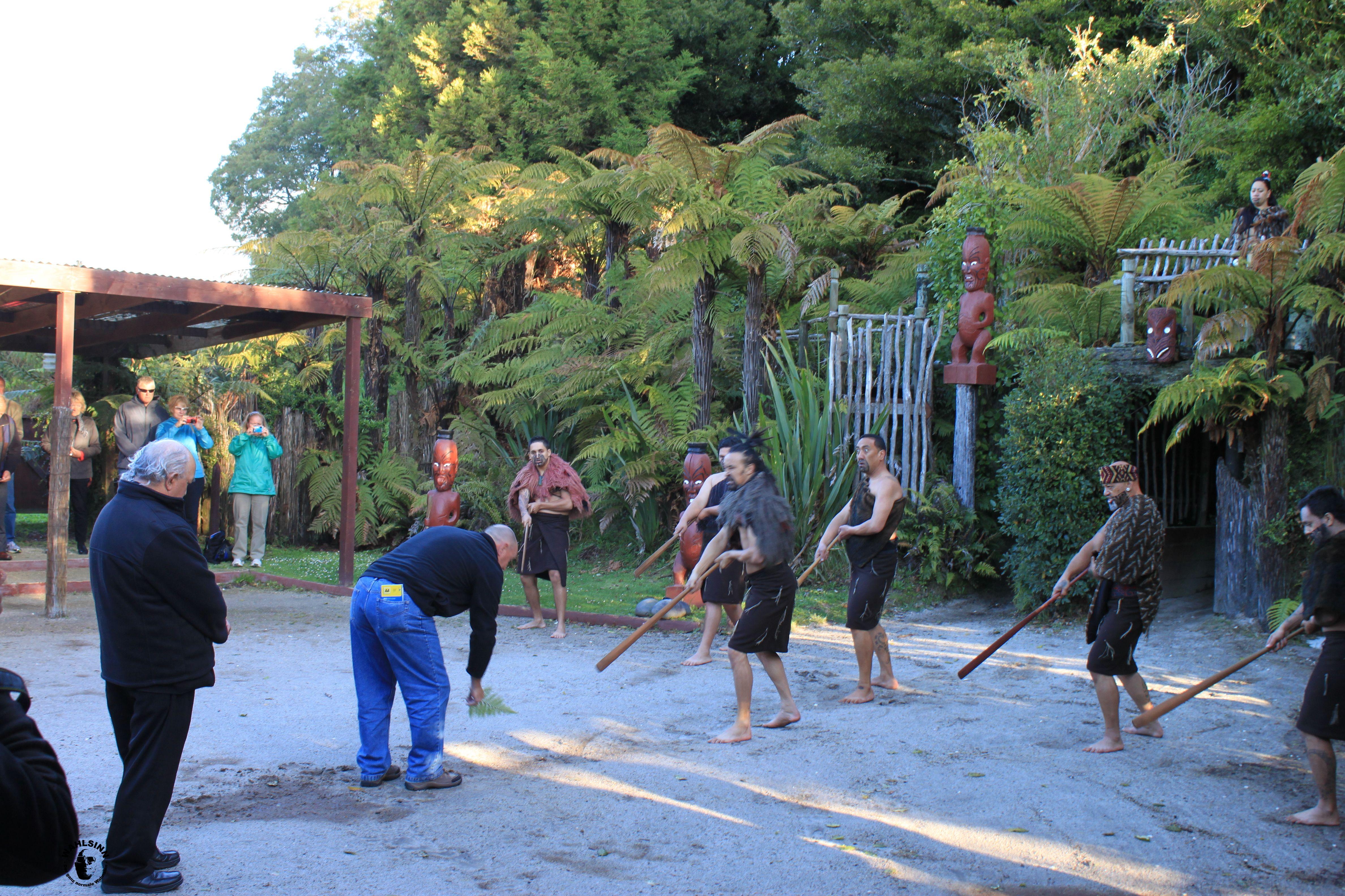 Unser Häuptling legt den Maori ein Friedensangebot vor // Neuseeland