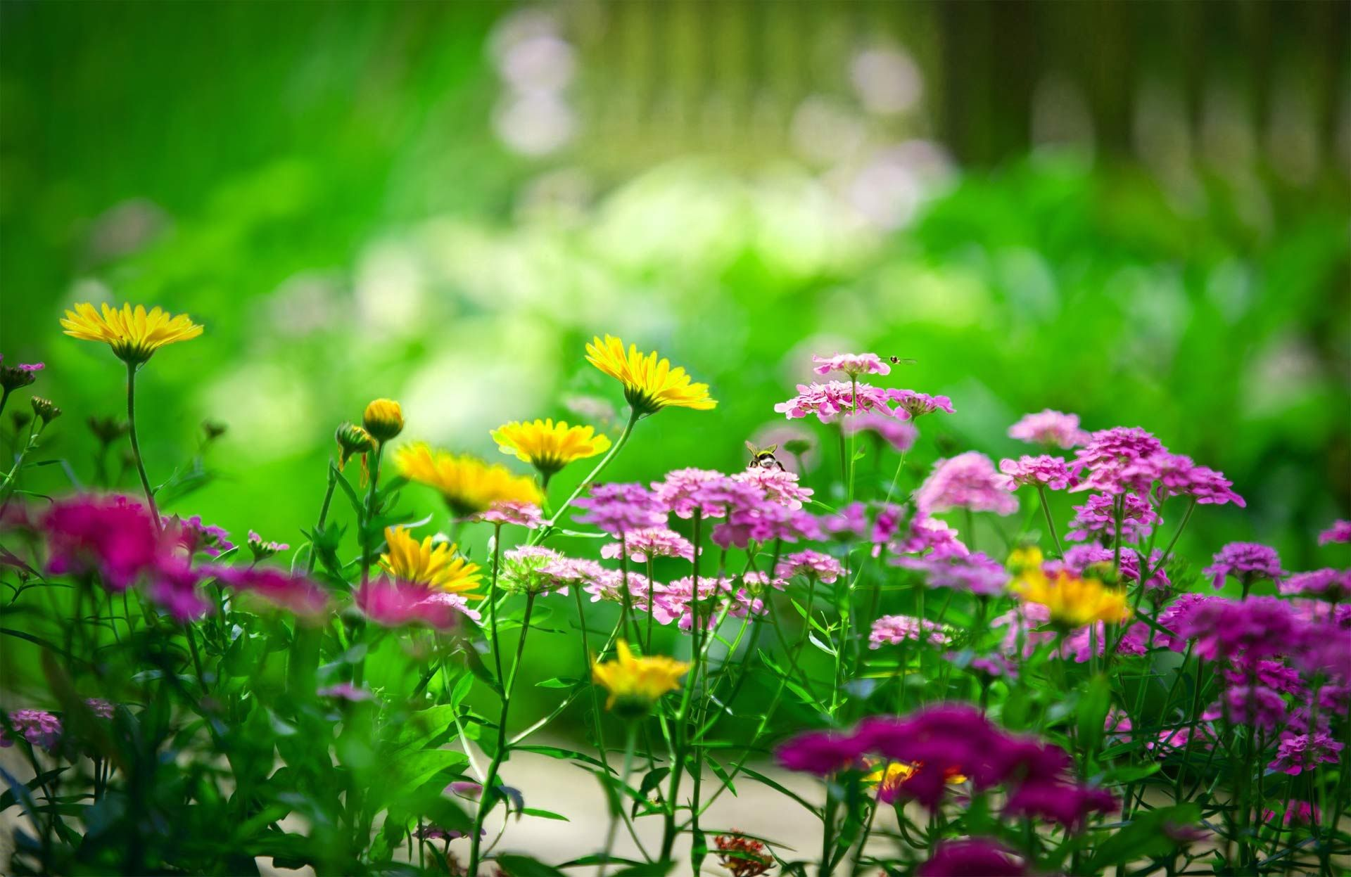 Fondos De Pantalla De Flores Hermosas En Hd Gratis Para