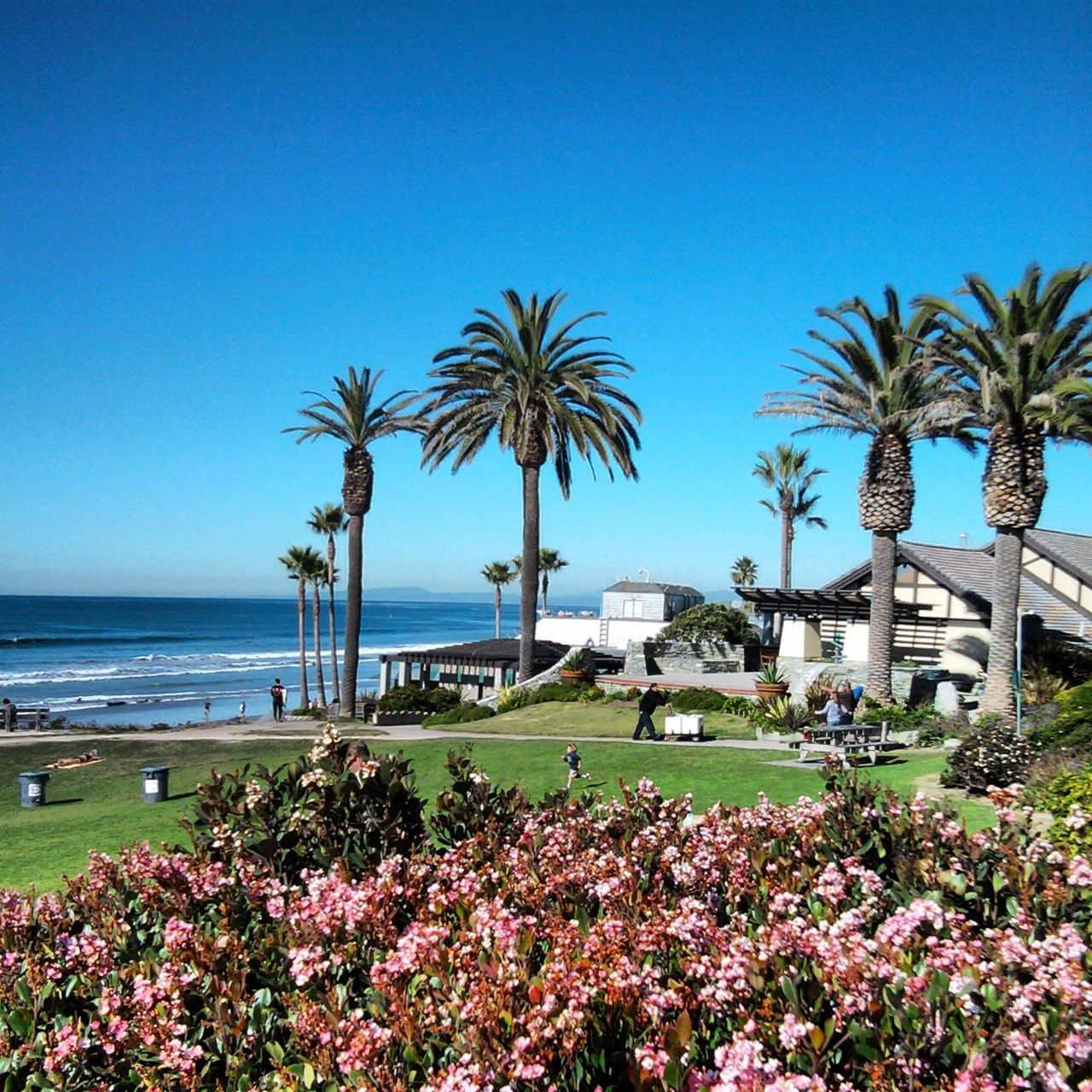 Dining in Del Mar, CA is so delicious, the hardest part is knowing ...