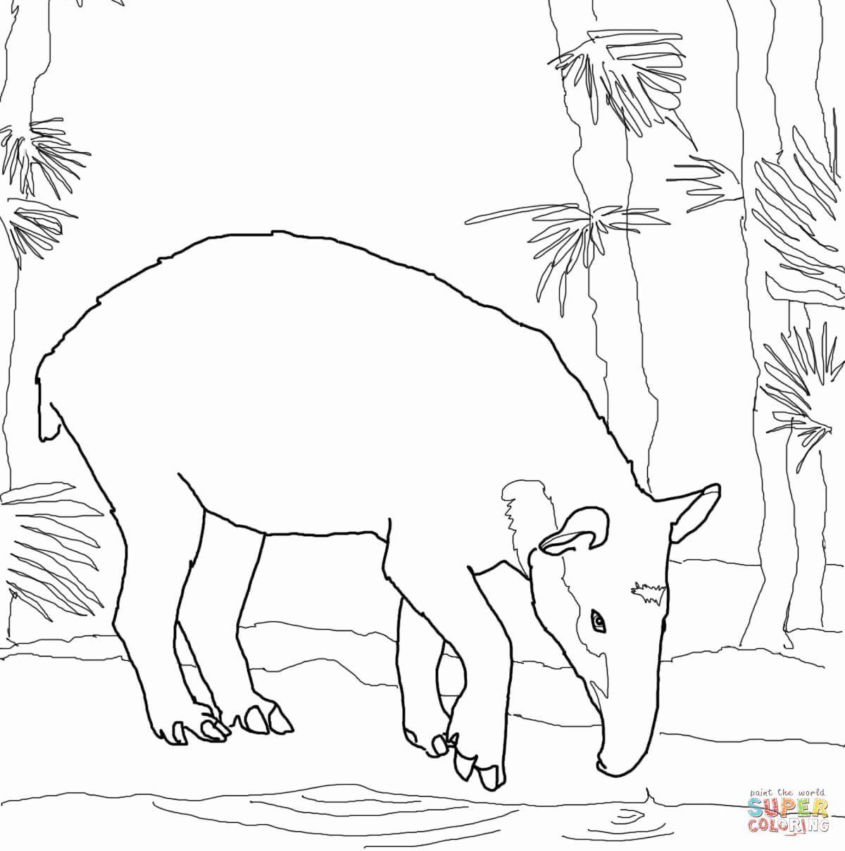 Coloring Pictures Of Trees Elegant Tapir Coloring Pages Di 2020