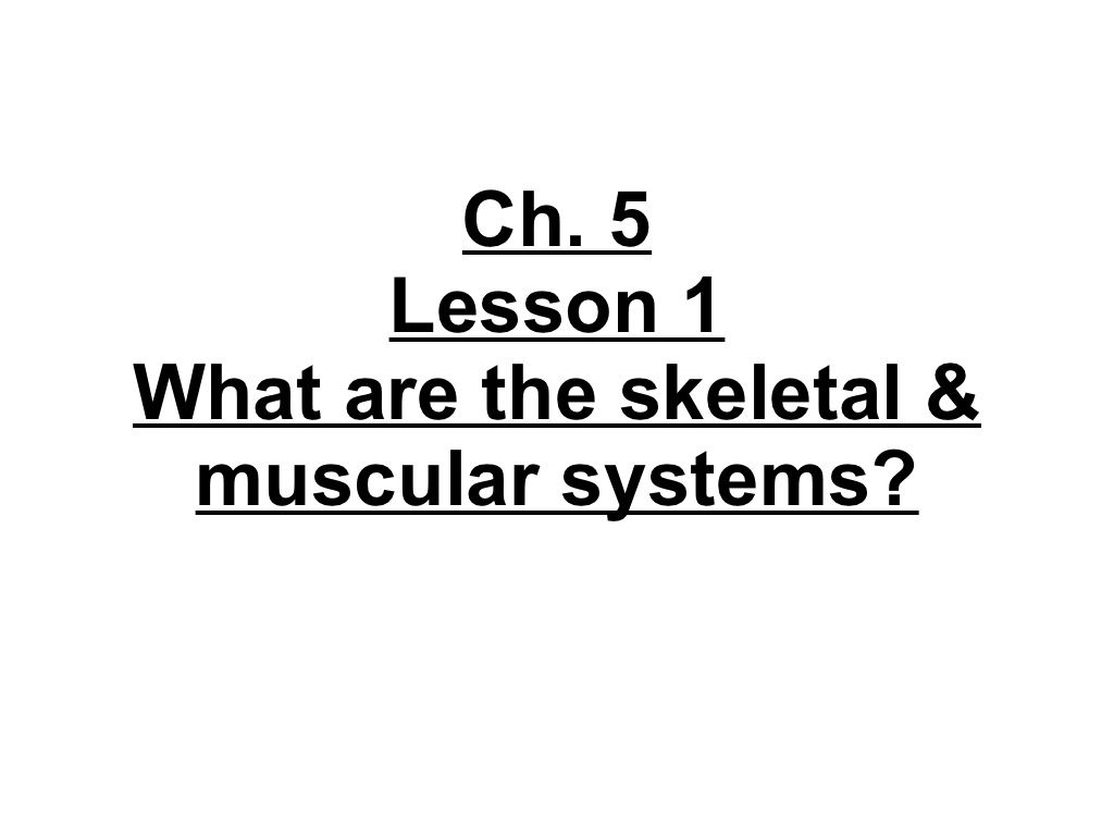 4th Grade Ch 5 Lesson 1 What Are The Skeletal And