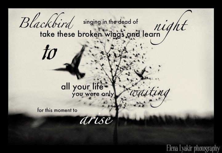 Black Bird Lyrics