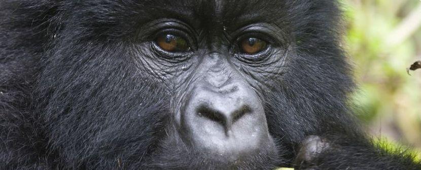 Gorila express - Salidas de enero a diciembre » Tuawo