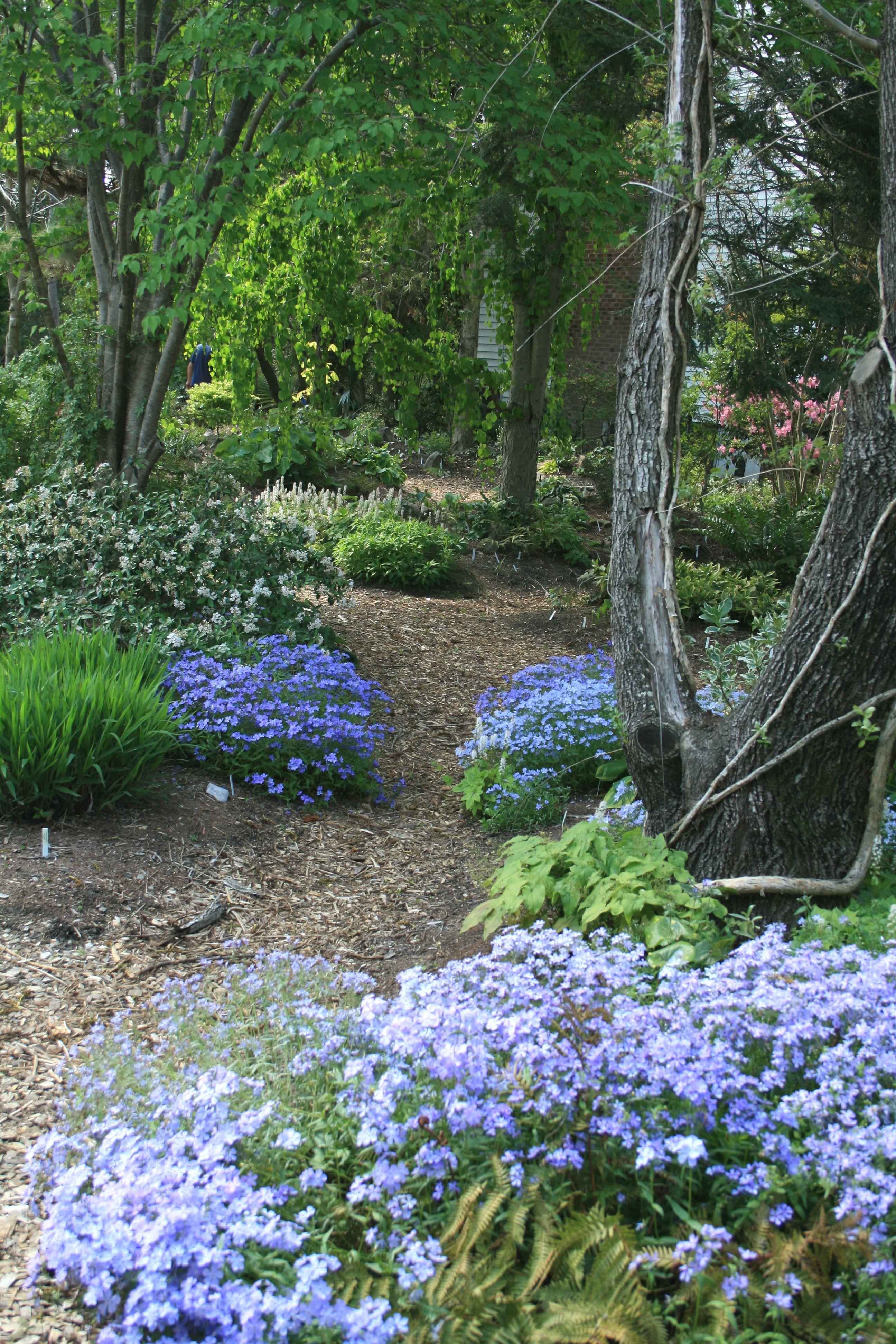 Paths Through Woodland Garden Should Be Informal As In This Photo Woodland Garden Forest Garden Shade Garden