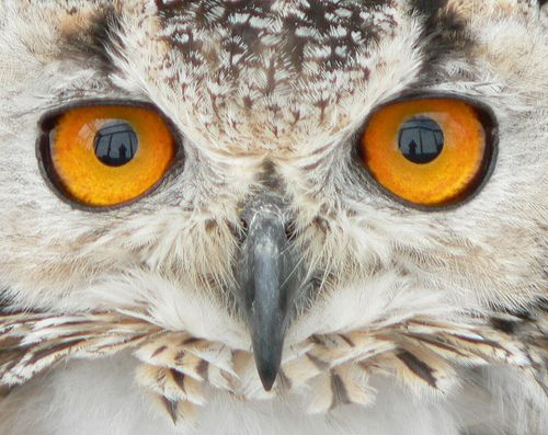 Owl Gifts Too Cute To Hoot Owl Eyes Owl Animals