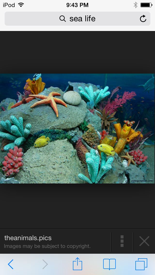 Various Marine Life Wallpapers Found All Over The Internet HD Wallpaper And Background Photos Of For Fans Sea Images