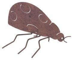 Lecciones sobre insectos con arcilla