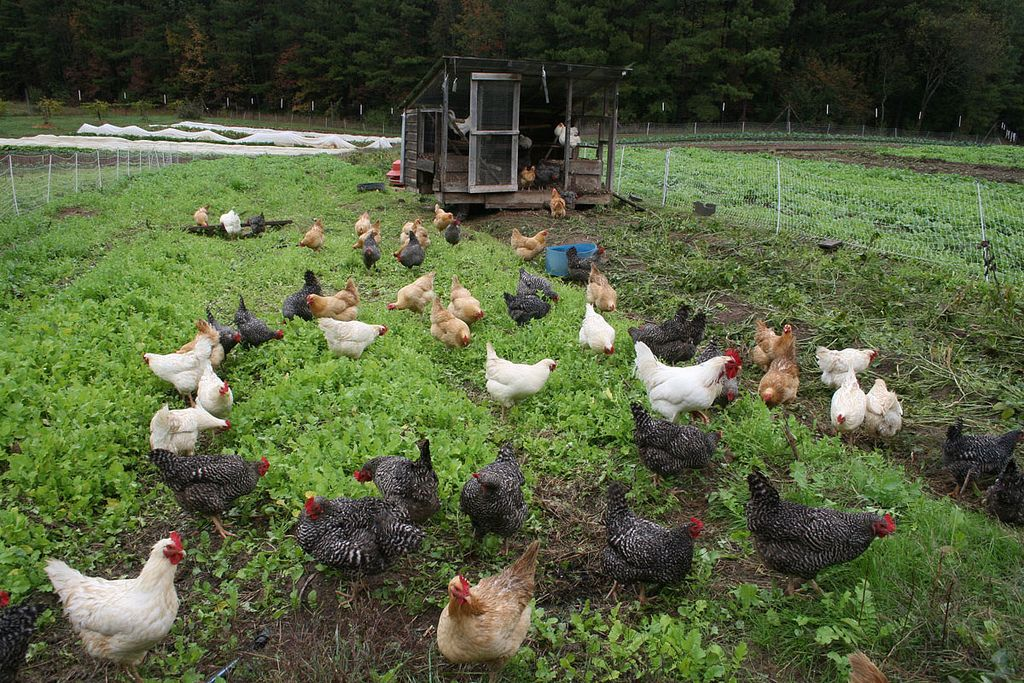How To Use A Small Farm For Tax Write Offs