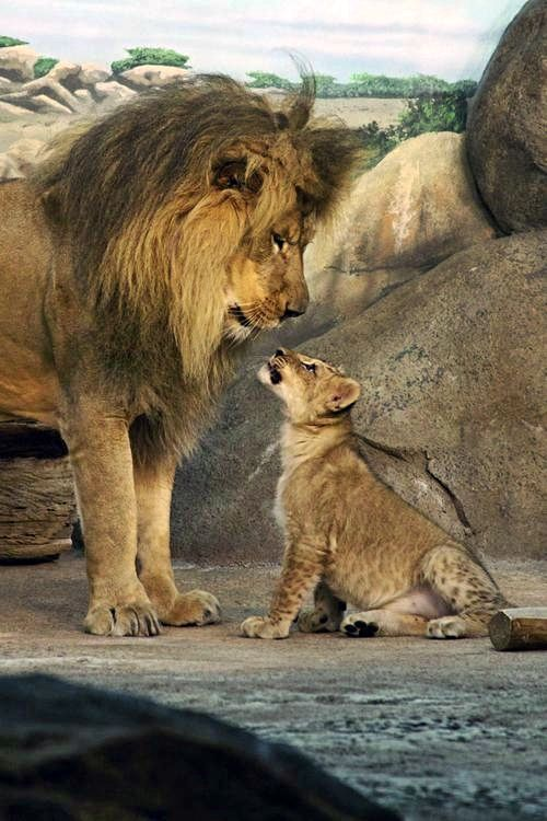 ●•●•●•King and Student ●•●•●•●•●•●