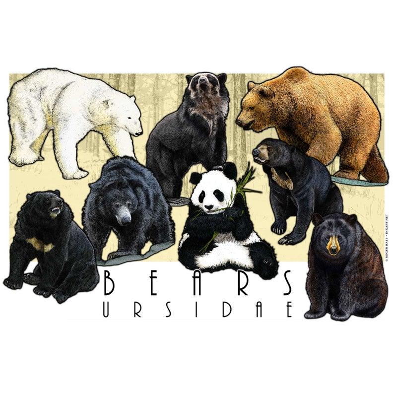 Bears Of The World Poster Print Etsy Bear Art Polar Bear Art Animal Illustration