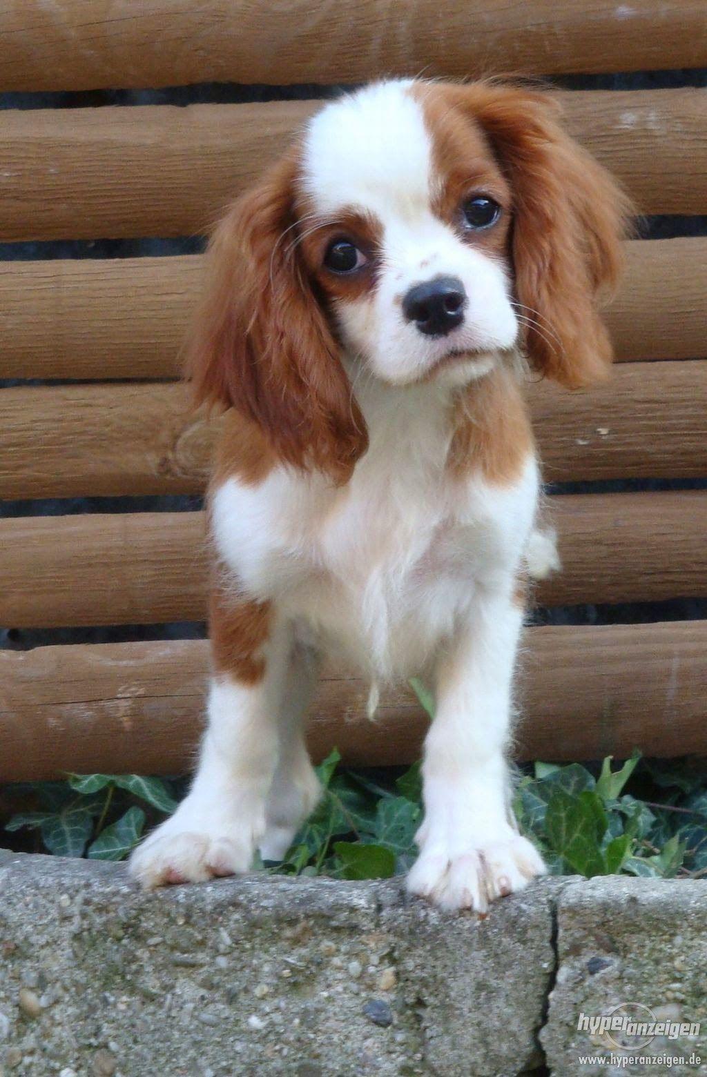 Top 5 Family Friendly Dog Breeds Dog Breeds Friendly Dog Breeds