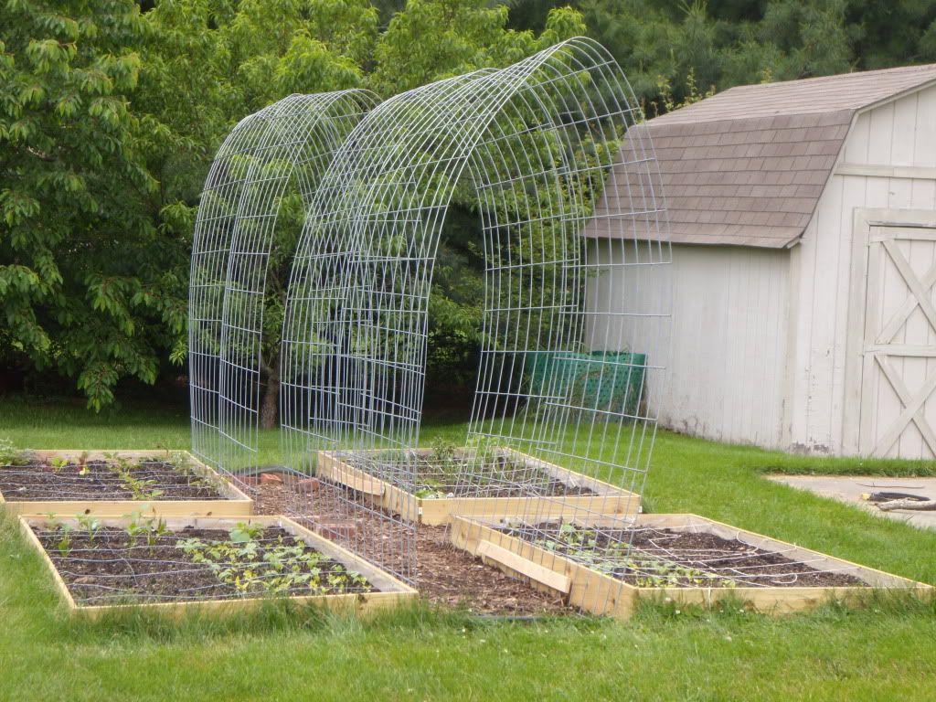 Green Bean Trellis Ideas Part - 41: Cattle Panel Trellis Gardening - Before The Plants Began Vining.