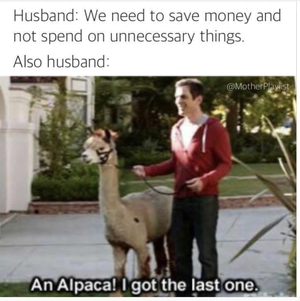 20 Silly Animal Memes That Ll Brighten Your Day Husband Meme Silly Animals Husband Humor