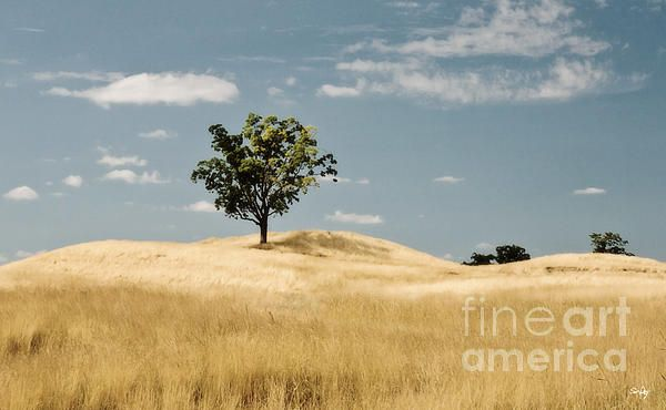 Beautiful image of a tree sitting on top of a hill.