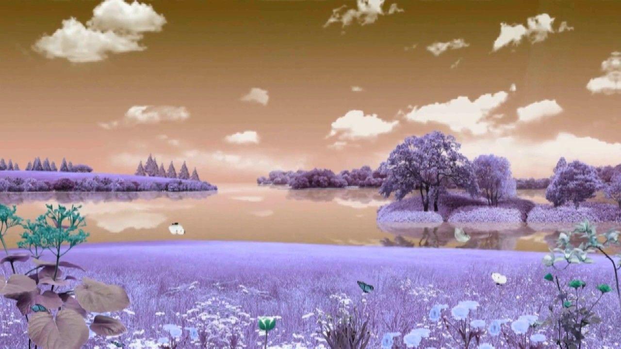 Free Hd Background Wedding Background Video Background Motion Backgro Pemandangan Alam Pemandangan Anime