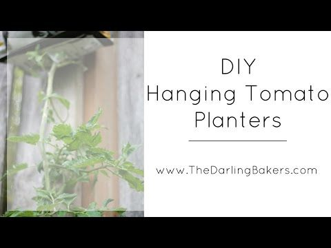 DIY Upside Down Tomato Planters - The Darling Bakers
