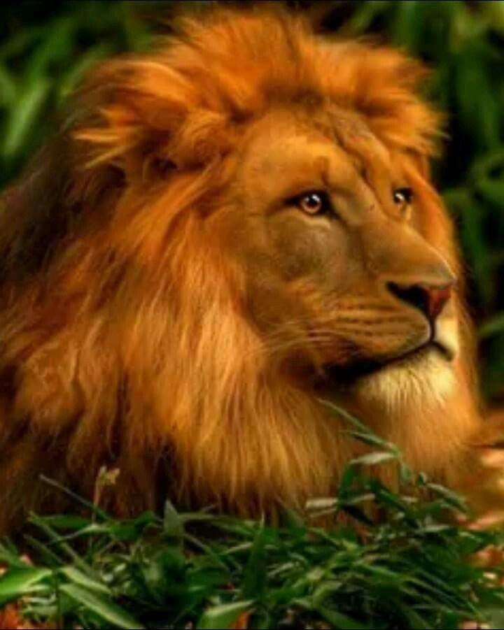 День рождения, картинки анимации львов