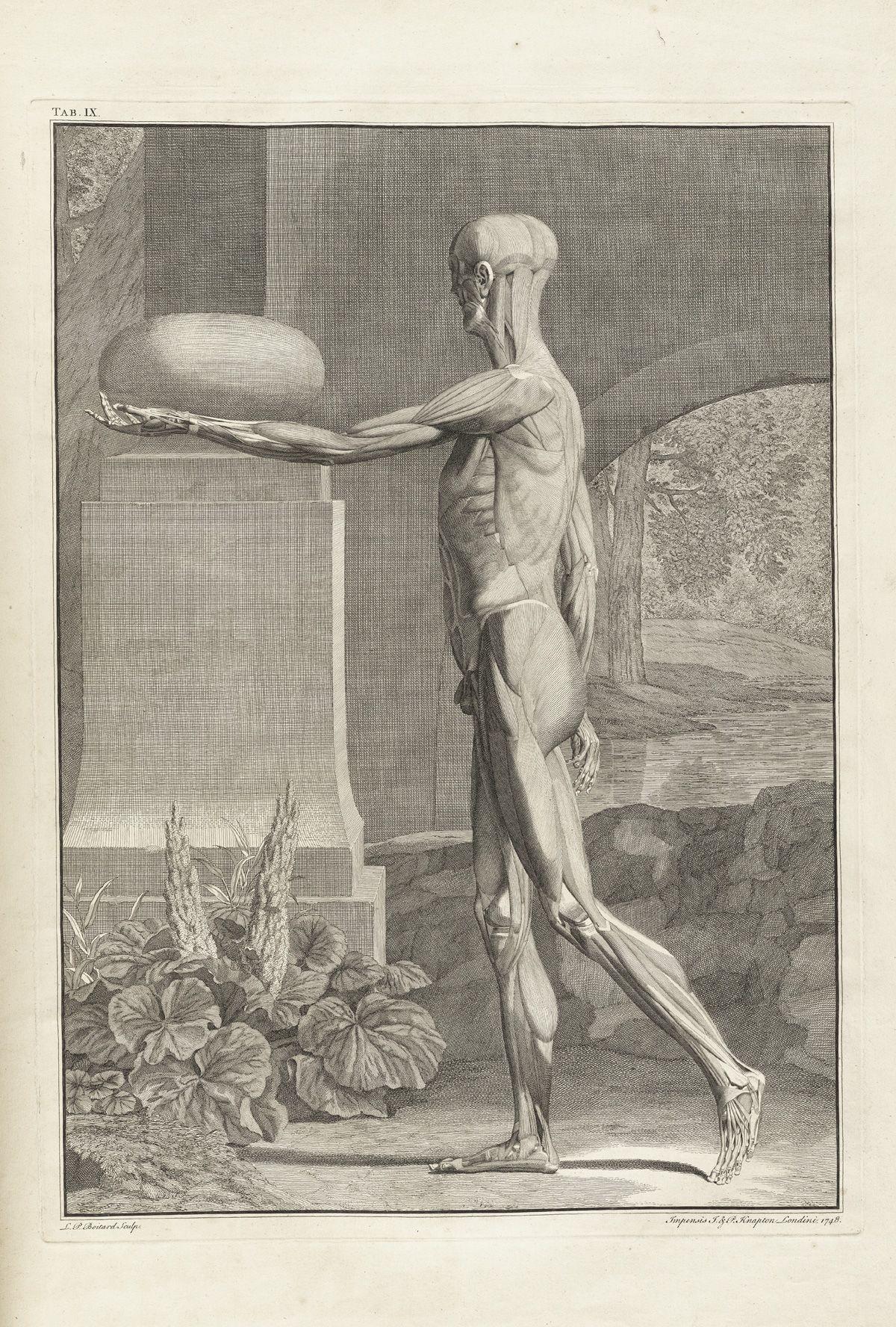 Bernhard Siegfried Albinus | Cuerpo Humano | Pinterest