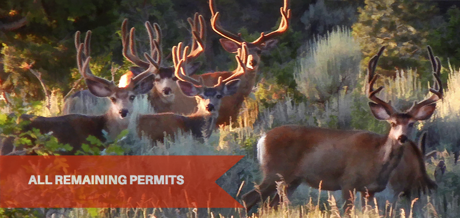 A list of all remaining big game permits and when they go