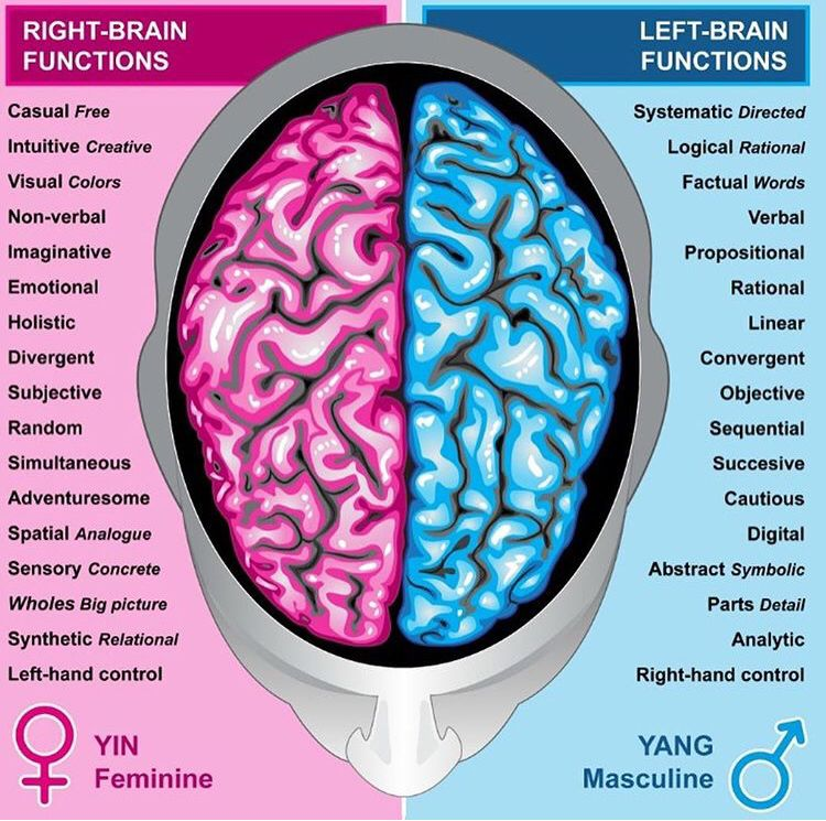 Pin by Mocchaa on Self Work   Brain anatomy and function ...