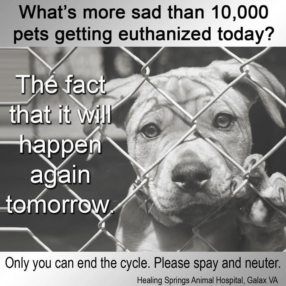 Pin by Linda Acup on Dog And Animal Abuse Awareness