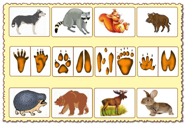 люди форме развивающие картинки с дикими животными радаров