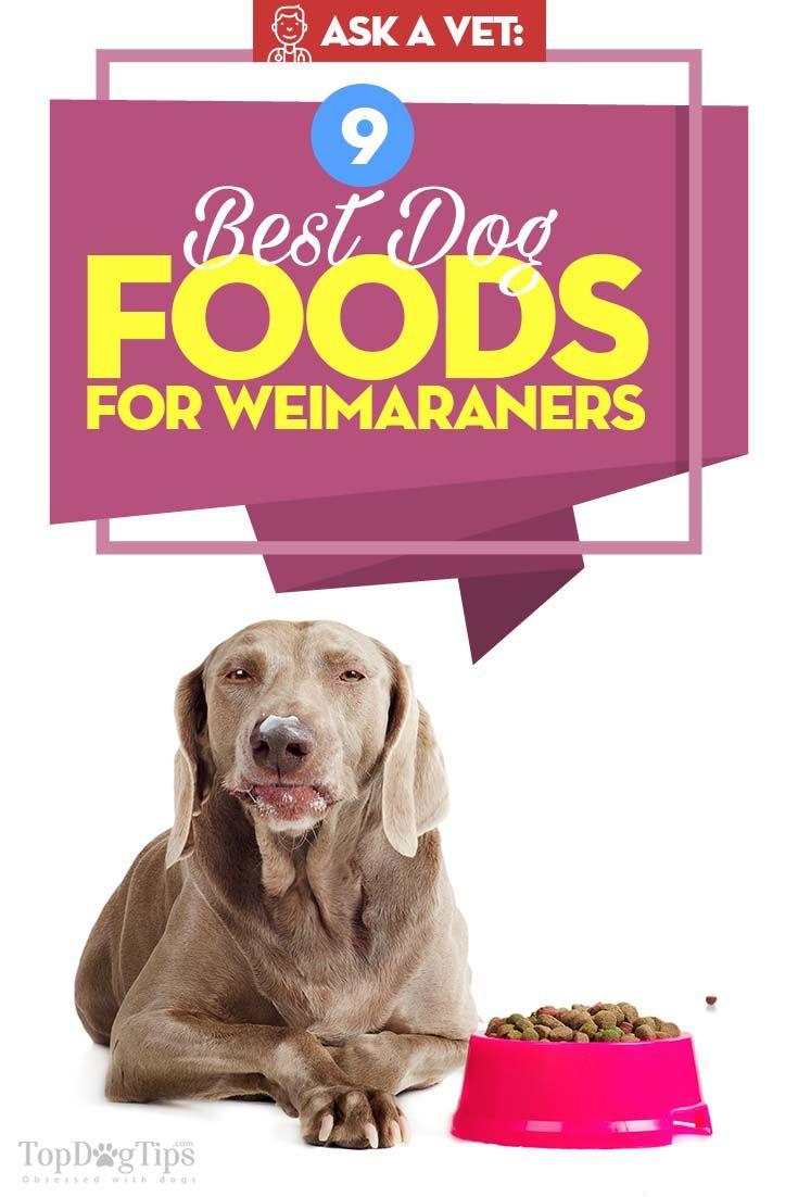 9 vet foods for weimaraners best puppy food