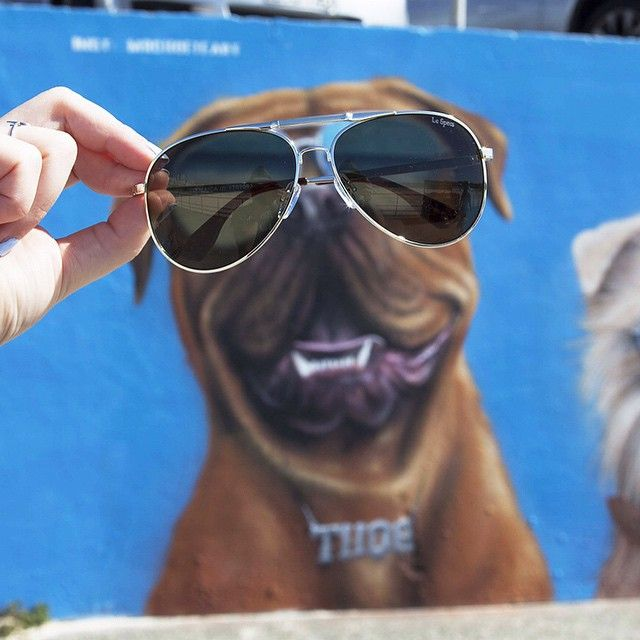 FRIDAY FUNDAY! Looking good pooch /// #lespecs #summer #sunglasses #Bondi #fridayfunday #fridayfunday