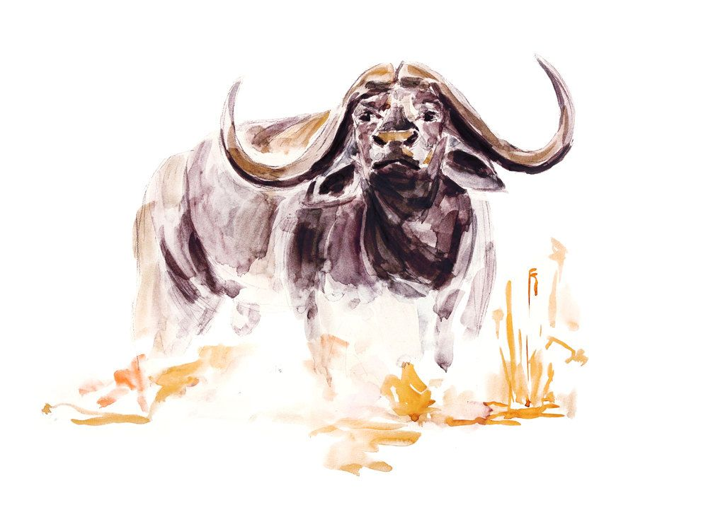 PHOTO POSTER ANIMAL ART AFRICAN BUFFALO RETRO PLAQUE METAL SIGN